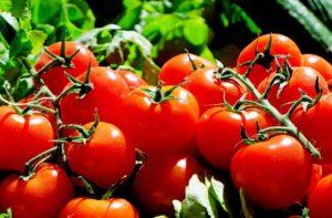 Tomaten als Ursache der Mückenplage in der Küche?